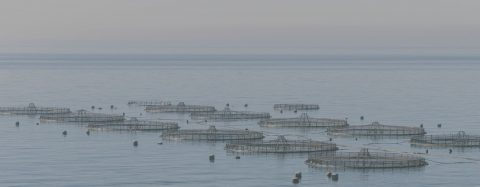 Specialty Risks Aquaculture